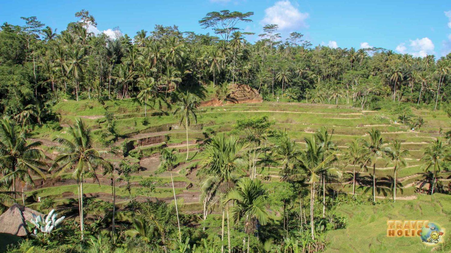 Une rizière en escalier à Ubud